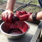Hand-squeezing-black-elderberries